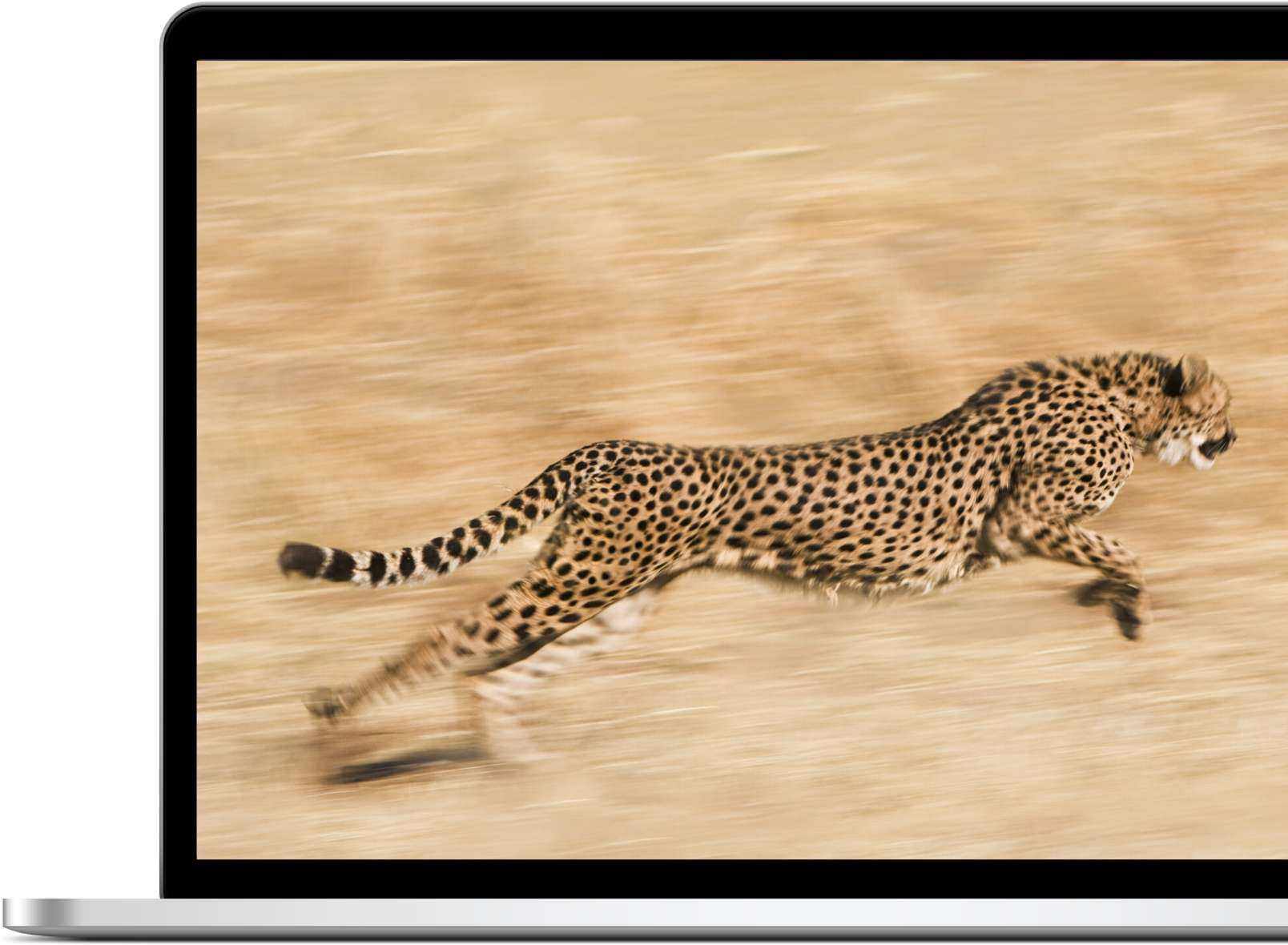 Picture of cheetah on laptop | Fast therapy website